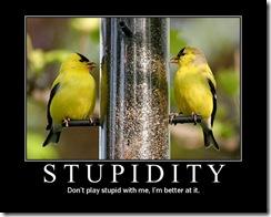 18-stupidity